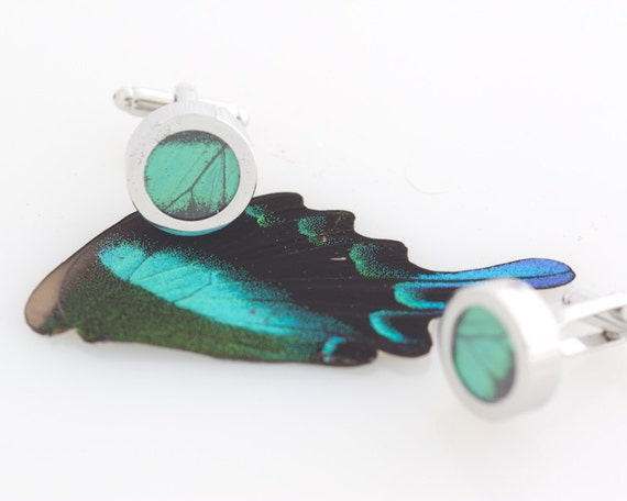 Real Butterfly Wing Cuff Links Peacock Swallowtail