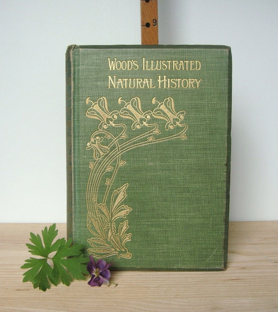 woods illustrated natural history - antique book