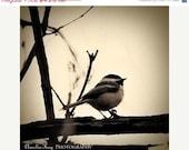 ON SALE - Fine Art Bird Photography Print - Little Bird - 3x3 Natural Earth Tones Nature Decor fall autumn