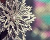 Holiday Ornament Photograph - Silver Star, Christmas home decor, winter sparkle still life gray rainbow red black green pink flower glitz