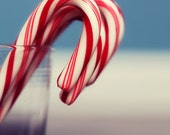 Candy Cane Holiday Photograph - red white stripes sugar Christmas peppermint tree decor blue grey whimsical 5x7