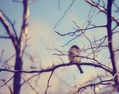 Bird Tree Photograph Print - Gazing - Wildlife - Feathered pale blue pastel brown grey tree branch white teal aqua - 8x10