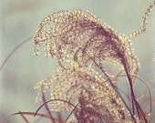Whispers In The Breeze - Fall Flower Photography Print Nature Earth Tones Pale Blue mint floral autumn grass plant harvest golden yellow
