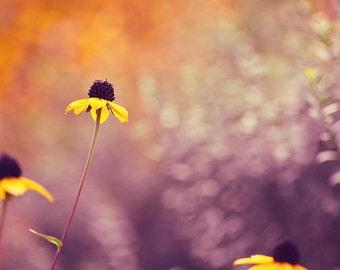 50% OFF Flower Photography - nature photograph, garden, yellow daisy picture, purple violet, orange, black, green, bedroom decor