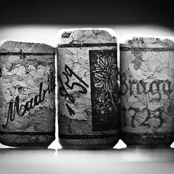 Line Of Corks - 24x24 Fine Art Photograph