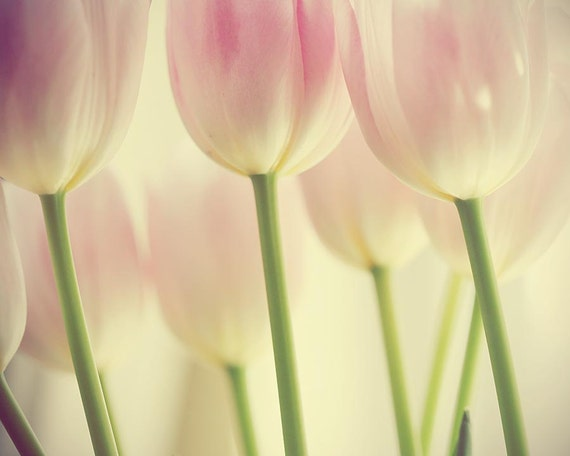 Flower Stems - Tulip Photograph - spring abstract soft pink nature garden sage tulips spring garden pastel ivory home decor