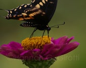 Zinnia Feast Floral Photo Greeting Card