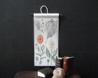 Miniature Natural History Chart---Botany