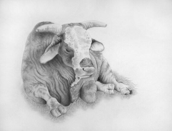 Framed Bull Art, Brahma Bull, Pencil Art, Farm Life, Ready to Hang,