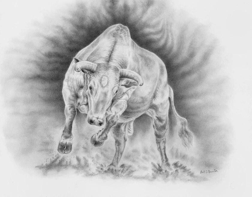 Taurus Bull Drawing Zodiac Symbol PictureTaurus Bull Drawing
