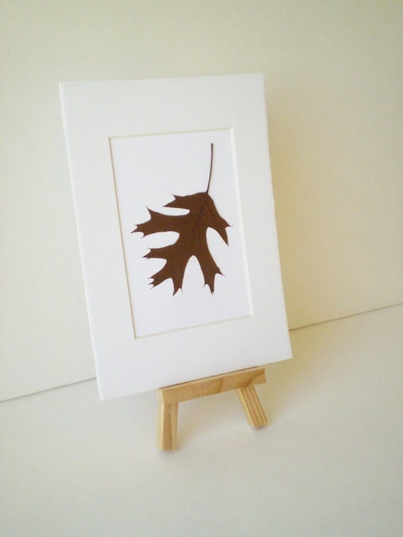 Un-framed Real Pressed Hanging Brown Oak Leaf Pressed Art - 5 by 7 inches ---A31