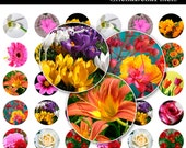 Spring Time Bottle Cap Images - 4x6 Digital Collage Sheet (No. 151) - 1 Inch Round Circles for Bottlecaps, Magnets, & So Much More