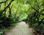 Serene Tree Canopy and Stone Path - Central Park Conservatory Garden - New York Nature Photography - 12X18 Fine Art Color Photograph - StefaniePoteetPhoto