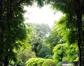 Peaceful Secret Garden Trellis - Central Park Conservatory Garden - New York Nature Photography - 4X6 Fine Art Color Photograph