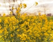 Field of Yellow Wildflowers - Spring Home Decor - Soft and Dreamy Wall Art - Gift for Mum, Mom, Her - Fine Art Photography
