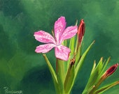 Pink Wild Flower - Small Oil Painting 8x10 - FREE SHIPPING