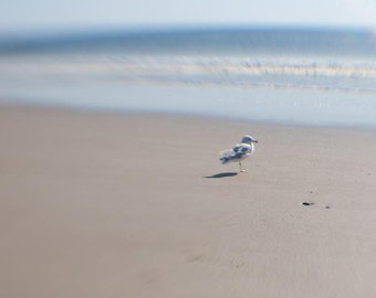 Seagull on beach in New Hampshire
