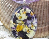 Purples, Violets and Sunshine Yellow Pressed Violas  Blooms behind 1.5  glass oval.