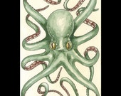 Octopus handmade watercolor painting