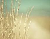 minimalist fine art photography / summer wheat, golden, gold, ,mint green, seafoam green / golden no. 2 / 8x10