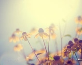 summer flower photography, black-eyed susan, nature photography, botanical photography, sun, yellow, gold, golden, pale blue, hazy/ glow