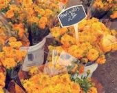 marigold flower farmer's market photography / yellow, gold, golden, summer, shop local, sun / marigolds / 8x8 fine art photo