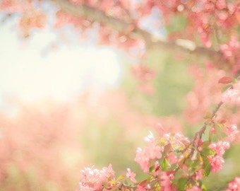 spring nature photography / flower, bloom, blossom, feminine, pastel / pink, green, blue / spring scene / 8x12