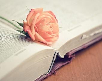 book rose still life photograph / flower, text, print, love, rose, pink, peach, apricot, literary, valentine / read / 8x10 fine art photo