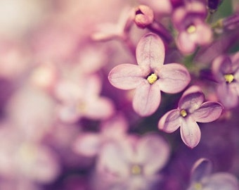 lilac botanical photography / spring photography, purple, lavender, amethyst, nature, macro photography, feminine, flower / lilac /