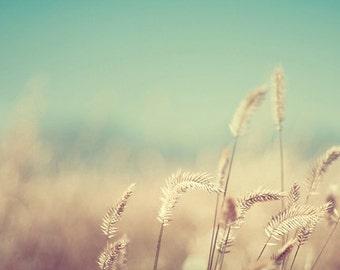 nature photography, summer, field, sun, aquamarine, gold, golden, yellow, straw, robins egg blue / golden no. 3 / 8x10