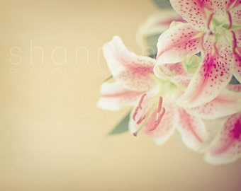 lily spring flower photograph / feminine, pastel, floral / gold, yellow, pink, white / lilies / 8x10