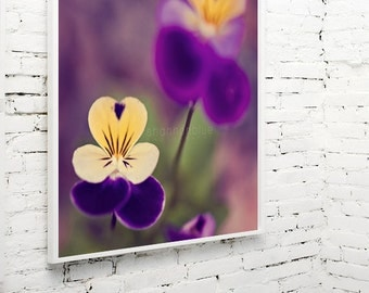 summer viola flower photograph / violet, pansy, purple, amethyst, yellow, gold, green, macro / voila viola / 8x8 fine art photo