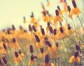flower photography, summer, nature photography, black-eyed susan, mustard yellow, prairie coneflower, wildflowers / summer gold
