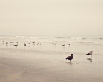beach photography / bird, seagull, tern, coast, california, desaturated, earth tones, serene, nature photography / birds of a feather /