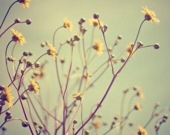 yellow summer flower nature photography / nature, flowers, vintage, retro, cyan, mustard / little things / 8x8 fine art photo