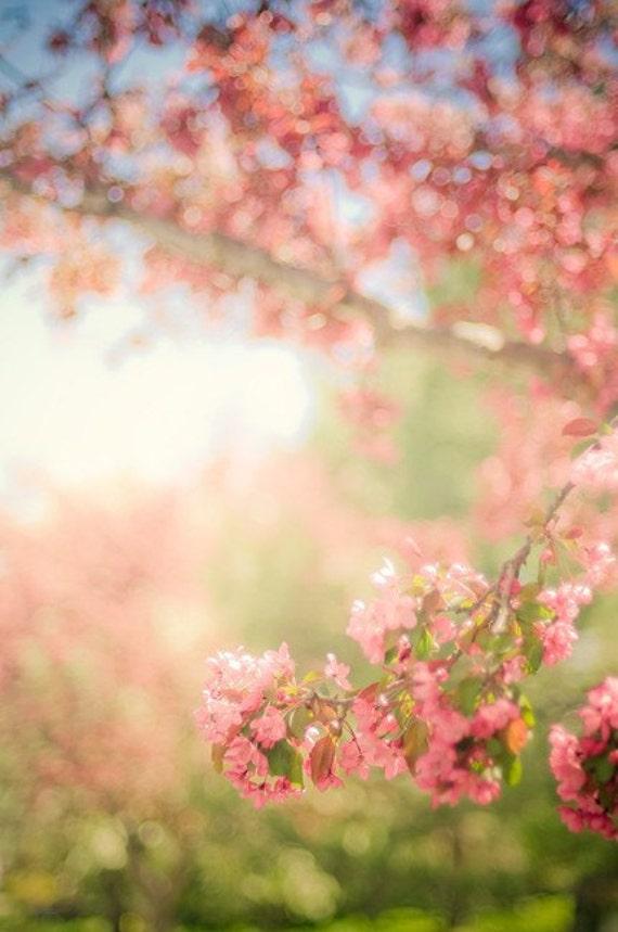 spring nature photography / flower, bloom, blossom, feminine, pastel / pink, green, blue / spring scene / 8x12