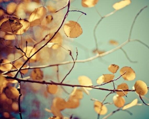 autumn fall foliage aspen nature photography / gold, yellow, golden, robins egg blue, mint green / golden aspen / 8x10 fine art photo