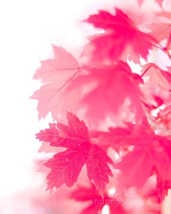 maple leaf photography / nature photography, autumn, pink, red, minimalist, maple leaf, leaves / pink on white / 8x10 fine art photograph