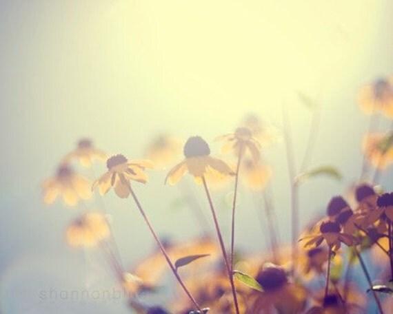 summer flower photography, black-eyed susan, nature photography, botanical photography, sun, yellow, gold, golden, pale blue, hazy/ glow