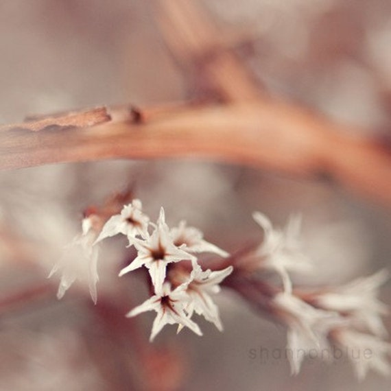 spring nature photography, botanical photography, flower, earth tones, neutral tones, autumn, fall / wispy / 8x8 fine art photo