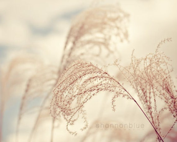 nature photography, light, fluffy, airy, pale, dry, neutral tones, sky blue, white clouds / light as a feather  / 8x10