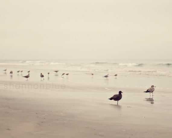 beach photography / bird, seagull, tern, coast, california, desaturated, earth tones, serene, nature photography / birds of a feather /