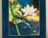 Dragonfly with Waterlily - Matted Altered Photo Print, Dragonfly Photographic Art, Dragonfly Matted Print, Pond Scene