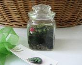 SALE Mini moss terrarium with red topped mushroom