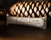 Pine Cone lip embellishment in eco friendly tube - ForStrangeWomen
