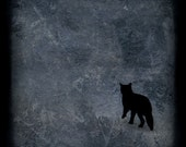 Black cat photo print, photography, Dark, mysterious, hopeful - That First Step - Fine art photograph, photo painting, 8x8 print