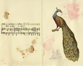 To be human, Peacock and music collage, 8x10 print