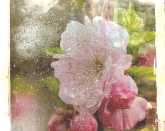 Visual Poetry 3, Fine art photograph, 8 x 8, Pink flower, rose