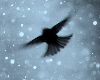 Snowflake Flight, little flying bird on cold, blue, sparkly winter sky, snow bokeh, fine art nature photography
