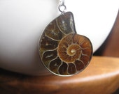 ammonite necklace. espresso ammonite and sterling silver necklace. silver necklace. coffee liqueur.
